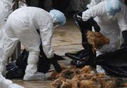 Ucraina interzice importul de carne de pui din Prahova , din cauza gripei aviare