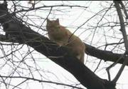 O pisica a stat 75 de ore intr-un copac la peste 7 metri inaltime. Autoritatile nu au vrut sa intervina pe motiv ca nu e de competenta lor. Cine este cel care a salvat-o