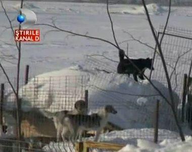 500 de animale salvate din situatii critice. Au ramas inzapezite, insa oameni cu suflet...