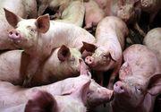 Pensionar din Dambovita,  mancat de viu de porcii pe care-i crestea in casa