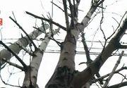 Noua atractie a Constantei sunt copacii fara crengi? Dorel a macelarit sute de arbori de pe un bulevard. Prinsi asupra faptului, lucratorii au avut o reactie uluitoare!