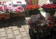 Amenzi de peste 4,5 milioane de lei pentru comert ilegal cu flori si plante ornamentale, in perioada 1 februarie - 9 martie