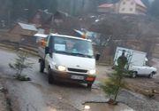 Ardelenii au plantat brazi in gropile din asfalt, pe un drum din Muntii Apuseni!
