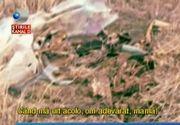 Descoperire macabra intr-un sat din Tulcea. Un sicriu cu oasele unei femei moarte de mai bine de 20 de ani a fost gasit pe marginea drumului