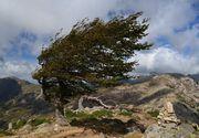Cod galben de vant puternic in patru judete din Romania - In zonele de munte deja ninge