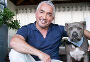 Cesar Millan, cel mai talent antrenor si psiholog canin, dezvaluie secretele din spatele meseriei pe care o face atat de bine