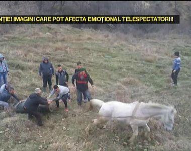 Stapanul a doua vacute a abandonat animalele in varful unui deal. Mai mult de o luna au...