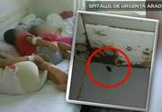 """Gandaci la sectia de Pediatrie din Neamt. Reactia incredibila a directorului spitalului: """"Gandacii nu sunt periculosi, ci doar neplacuti la vedere"""""""