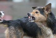 Baiat de 8 ani din Cluj, in stare critica dupa ce a fost muscat de 4 caini