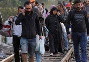 Un numar de 34 de migranti, prinsi cand incercau sa intre ilegal in tara din Serbia