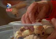 Romanii din strainatate sunt fericiti de Paste. Producatorii le-au pregatit colete cu bunatati 100% romanesti