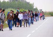 Un numar de 38 de migranti din Irak si Pakistan, intre care patru copii, prinsi la frontiera cu Serbia