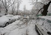 Zapada face ravagii in Focsani! 11 masini au fost avariate dupa ce copacii au cazut peste ele