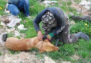 Doi barbati din Sibiu, cercetati penal dupa ce au incercat sa omoare un caine