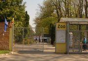 Fetita de 5 din Timisoara, infectata cu Borrelia dupa o vizita la Zoo
