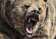 Doi barbati din Buzau, la spital dupa ce au fost atacati de o ursoaica si de puii acesteia