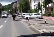 Imagini rare surprinse pe strazile din Cluj! Aparitia misterioasa, surprinsa de un clujean