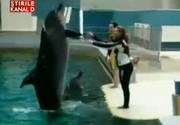Scene emotionante la Delfinariul din Constanta - Un tanar si-a cerut iubita in casatorie in fata delfinilor - Imaginile sunt superbe