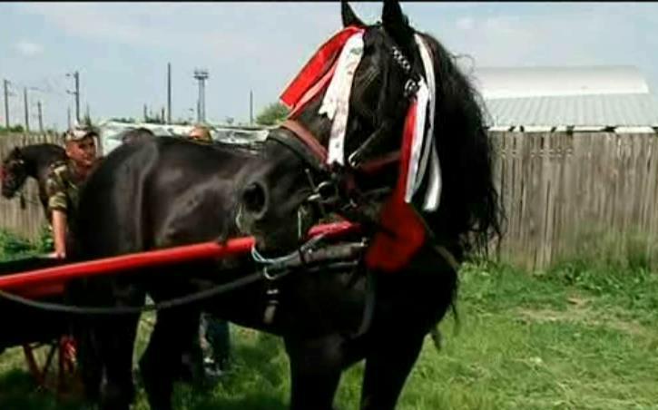 Tratament pentru copite la cai