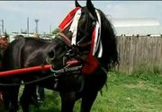 """Tratament special pentru caii din Galati din partea unor veterinari din Olanda si Elvetia: """"Este prima oara cand acesti cai primesc asa ceva"""""""