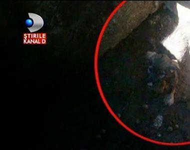 Politistii din Buzau au salvat un pui de catel care cazuse intr-o groapa. Catelul a...