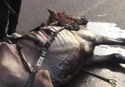 Imagini oribile! A aruncat cu ulei pe cal, dupa ce l-a batut si infometat. Stapanul animalului n-a avut pic de mila de el