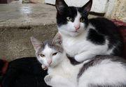 Autoritatile locale pun animalele la plata utilitatilor. Daca ai doua caini sau doua pisici vei plati pentru un om in plus