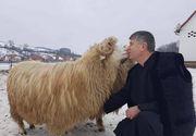 """Imaginile care arata dragostea pe care preotul-cantaret Cristian Pomohaci o are pentru oi! """"Spune ca oile sunt crestine. Vorbeste cu ele si le da nume"""" Afacerea nestiuta a barbatului acuzat de hartuire sexuala"""