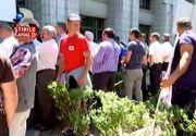Protestatarii din fata Ministerului Mediului au calcat in picioare gardul viu si iarba! Jandarmii au aparat pavajul