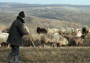 Un cioban de 17 ani din Hunedoara, transportat la Targu Mures cu un elicopter SMURD dupa ce a fost atacat de un urs in Retezat