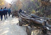 Furt de lemne la Ocolul silvic Lunca Timisului. Hotii, prinsi in timp ce incarcau intr-o masina lemnul taiat ilegal din padure