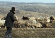 Ce pedeapsa a primit ciobanul care a anuntat la 112 ca a fost atacat de un urs si ca este ranit, alarma fiind falsa