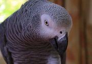 Femeie condamnata ca si-a ucis sotul, principalul martor al acuzarii fiind un papagal