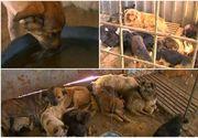 Abuzuri, tupeu si animale maltratate la adapostul din Ovidiu! In timp ce bietele animale mor in adapost, vizitatorii sunt dati afara din institutie si amenintati