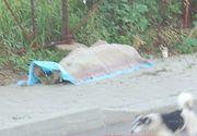 Scene inumane la Husi. Un barbat a murit din cauza caniculei si a fost lasat sa zaca pe trotuar, inconjurat de caini. L-au acoperit cu o patura si au plecat
