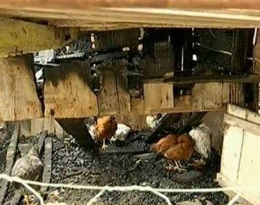Zeci de animale au murit intr-un incendiu langa rezervorul cu apa al unui sat din Arges