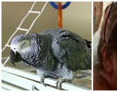 Si-a ucis sotul si a crezut ca va scapa nepedepsita, dar papagalul a dat-o de gol. Ce...