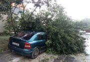 Prapad in urma unei futuni in Arges. Mai multi copaci au fost smulsi de vijelie