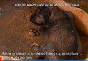 Afacerea maidanezul continua! Animale care sufera si mor in chinuri groaznice, in timp ce firmele si primariile se imbogatesc ilegal