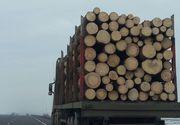 Interventie in forta la hotii de lemne din Maramures! Ce au gasit politistii in casele persoanelor acuzate de taieri ilegale si furt de arbori