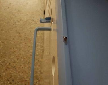 Gandacii misuna peste tot intr-un mare spital din Romania - Pacientii au ajuns sa...