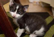 Orasul din Romania in care primarul le-a interzis oamenilor sa detina mai mult de doua pisici - Nici cainii nu au scapat de un tratament asemanator - Unde se intampla asta