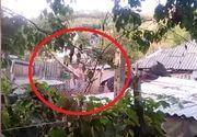 Scenele de groaza care au devenit virale pe internet. Un baiat de 16 ani, din Mehedinti, loveste cu bestialitate un cal cu o scandura groasa