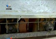 Animale chinuite pe contracte de sute de mii de lei. E dezastru la Adapostul Ovidiu. Inspectorii antifrauda parca inchid ochii la aceste infractiuni