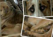 Afacere cu suflete? De foame, cainii din adapostul Ovidiu au ajuns sa isi manance cozile. Imagini socante