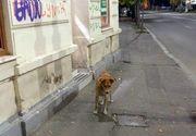 Fotografia facuta in Piata Romana, devenita virala pe internet