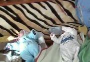 Povestea cvadrupletilor din Iasi care s-au nascuta vara aceasta. Mama lor nu a facut niciun control medical in timpul sarcinii si nu stia ca are patru bebelusi