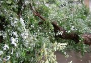 Taximetrist ranit dupa ce un copac a cazut peste masina sa, pe un bulevard din Capitala