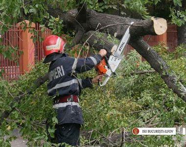 Peste 50 de copaci smulsi de vant in Capitala, fiind avariate 41 de masini. Mai mult de...