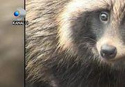 Acesta este cel mai ciudat animal descoperit in Delta Dunarii. Cum se numeste